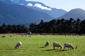 New Zealand, 2006