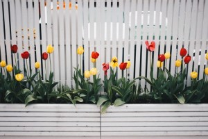 bloom-blossom-fence-701758